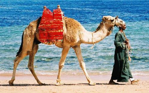 Пакетный тур: В Египет на неделю от 5 500 рублей *АРХИВ*