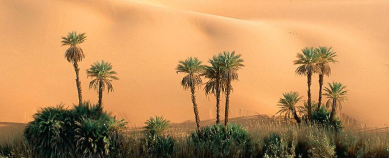 Тунис на майские праздники от 11 700 рублей *АРХИВ*