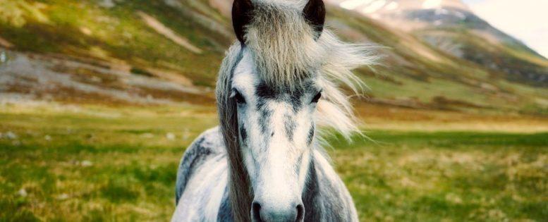 В Исландию весной 13 800 рублей *АРХИВ*