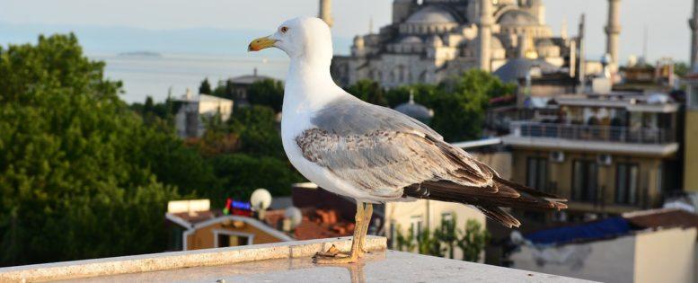 Архив. В Стамбул на выходные 6 300 рублей